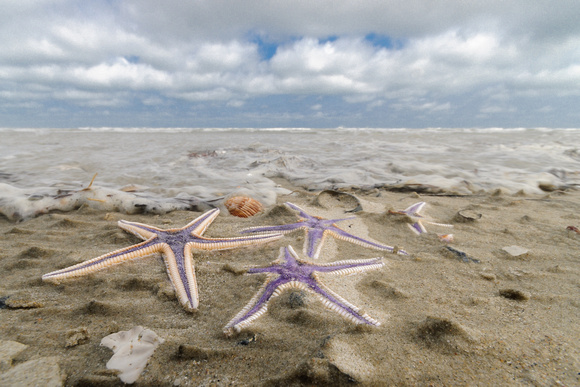 Marginal Sea Stars, Ocracoke, NC