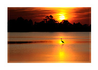 The sunsets behind a solitary Great Blue Heron