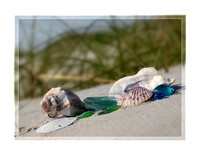 Beach Glass and Shells