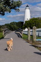The Ocracoke Lighthouse cat
