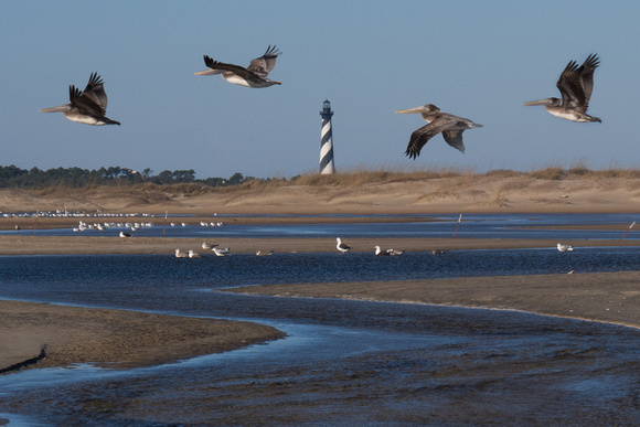 Pelicans over Cape Hatteras Lighthouse